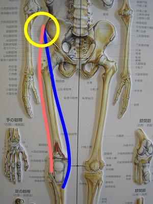 上前腸骨棘縫工筋大腿筋膜張筋